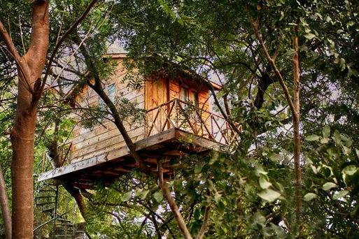 Kumpulan Rumah Pohon Yang Unik Di Dunia Ini Blog Rumahdewi