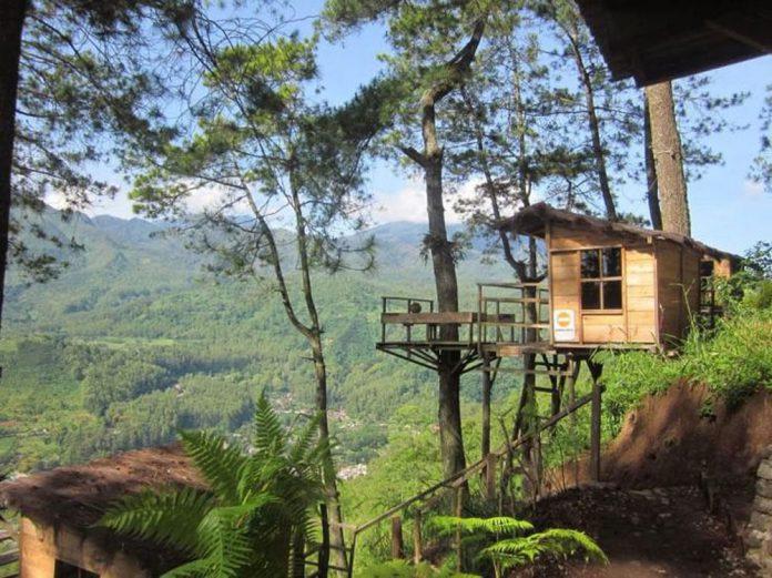 Kumpulan Rumah Pohon Yang Unik Di Dunia Ini