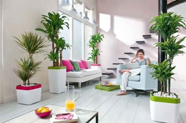 20 Jenis Tanaman Pembawa Keberuntungan Bagi Pemilik Rumah