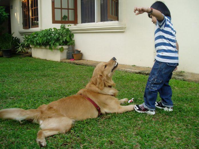 Manfaat Memelihara Hewan di Rumah