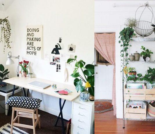 12 Inspirasi Indoor Plant Yang Cocok Untuk Rumah Sempit