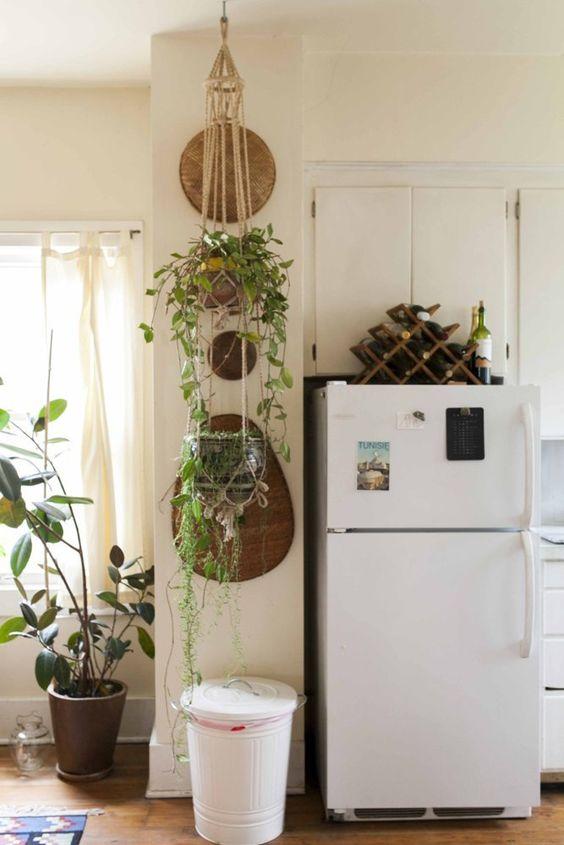 hipwee-indoorplant2
