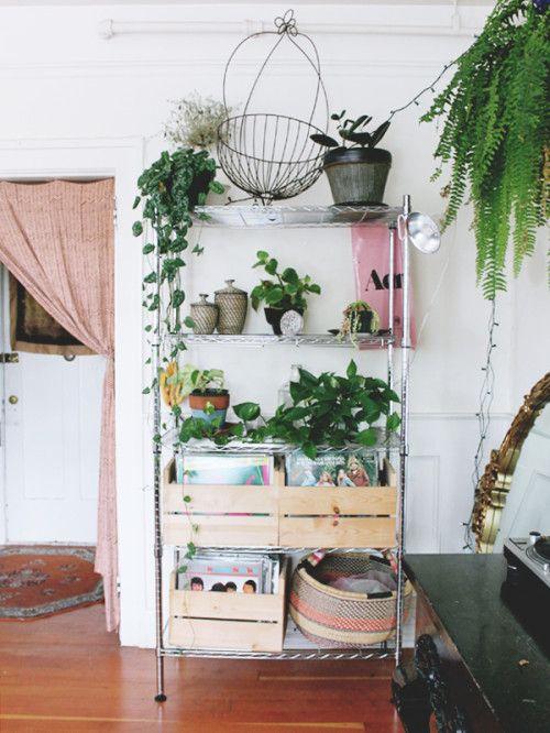 hipwee-indoorplant8