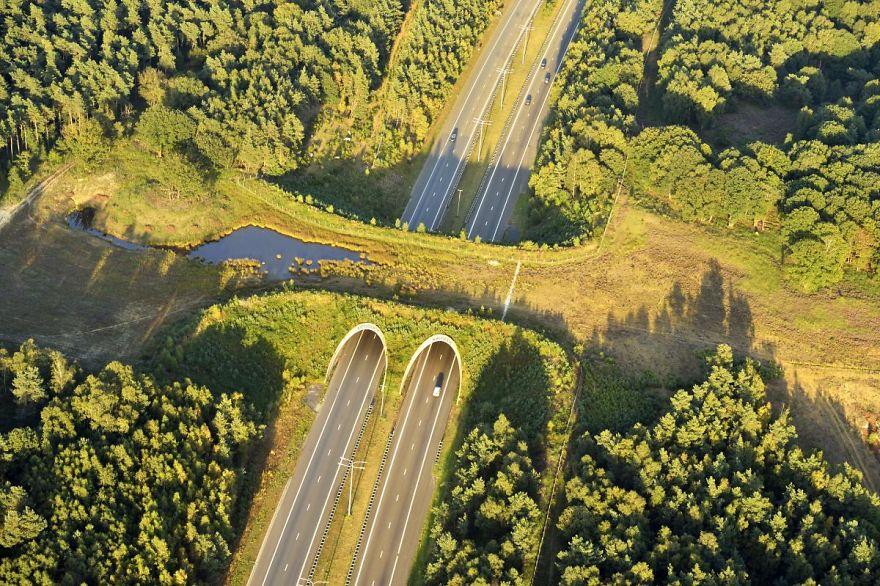 13 Jembatan Penyeberangan Dan Tunnel Khusus Untuk Hewan