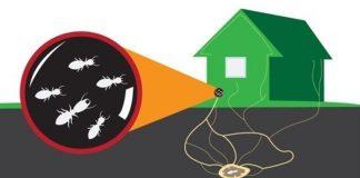 Tanda Tanda Bahwa Rumah Anda Telah Diserang Rayap