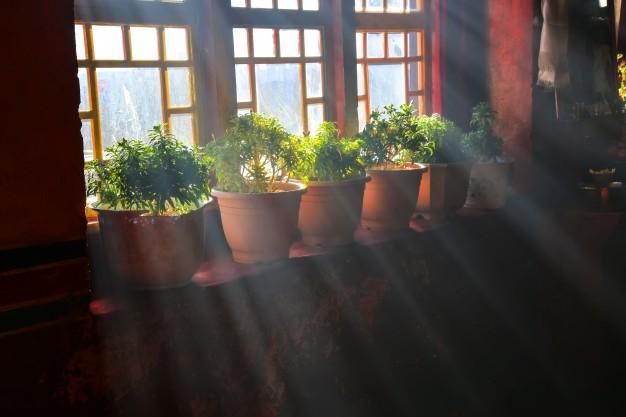 Tips Mudah Untuk Membuat Kebun Vertikal Yang Benar