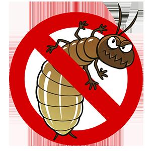 melindungi perabot kayu dari rayap