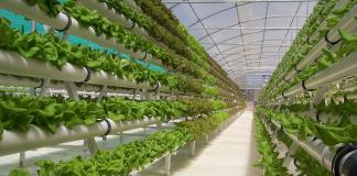 5 sayuran yang bisa ditanam secara hidroponik dirumah