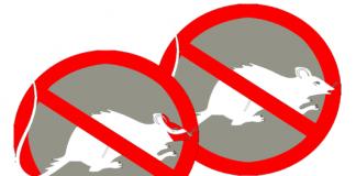 3 cara alami mengusir tikus yang berkeliaran dirumah