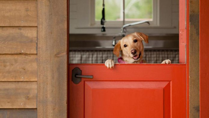 Begini Tips Agar Rumah Selalu Bersih Bagi Kamu Pemilik Hewan Peliharaan