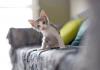 Hal Yang HarJenis Tanaman Hias Indoor Yang Dapat Membuat Suhu Ruangan Sejukus Diperhatikan Jika Pelihara Kucing di Rumah