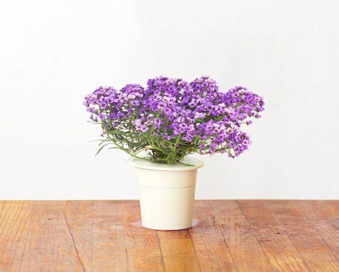 5 Jenis Bunga Hias Untuk Dekorasi Ruangan Yang Menyehatkan