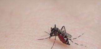 Agar Tak Jadi Sarang Nyamuk, Inilah Area Rumah Yang Harus Rutin Dibersihkan!