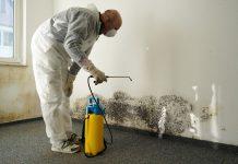 3 Cara Jitu Untuk Basmi Jamur Pada Dinding Rumah