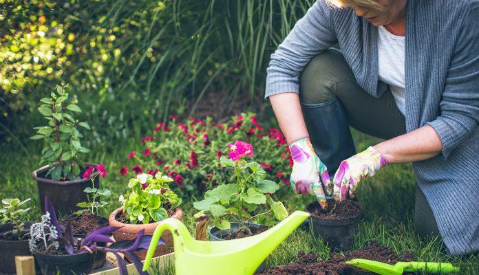 6 Peralatan Berkebun yang Wajib Kamu Miliki